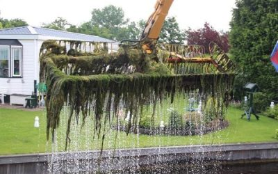 Succes in strijd tegen waterplant Cabomba
