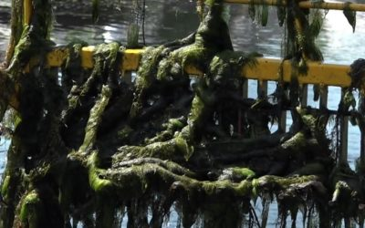 Harken op de bodem: deze mannen zorgen dat je kunt varen op de Loosdrechtse Plassen